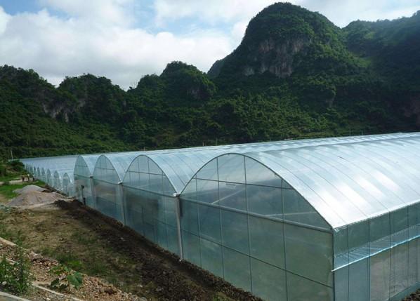 单拱薄膜连栋温室