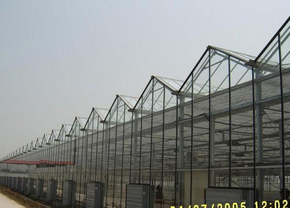 连栋玻璃温室建设